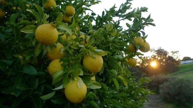 lolita.oranges.jpg